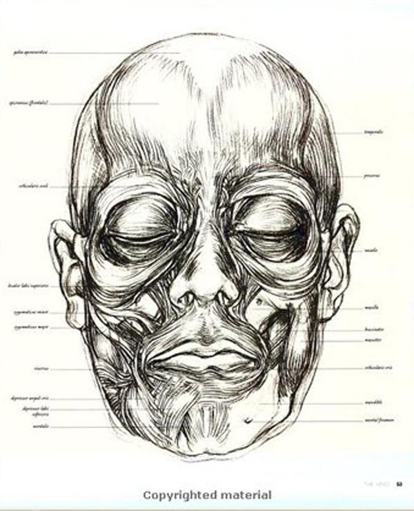 头部素描画法步骤