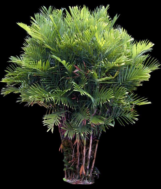 树木贴图素材