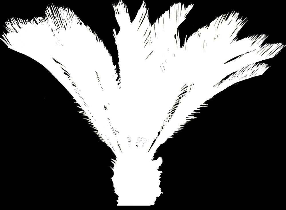 树木贴图素材 | 火星网-中国数字艺术第一门户