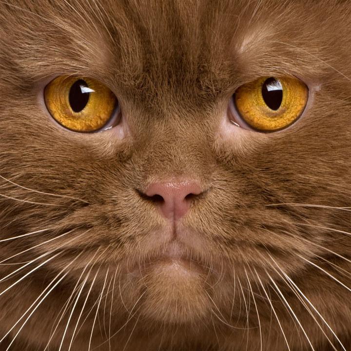 猫咪脸谱全集 | 火星网-中国数字艺术第一门户