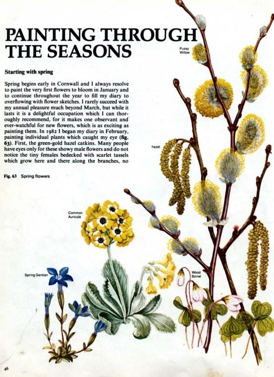 水彩画教程——花卉植物
