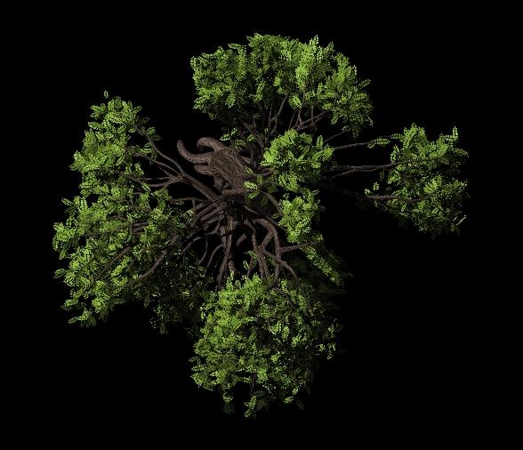 鸟瞰角度的树木贴图 |