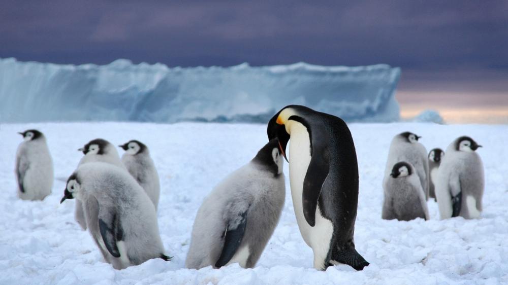 原qq头像企鹅